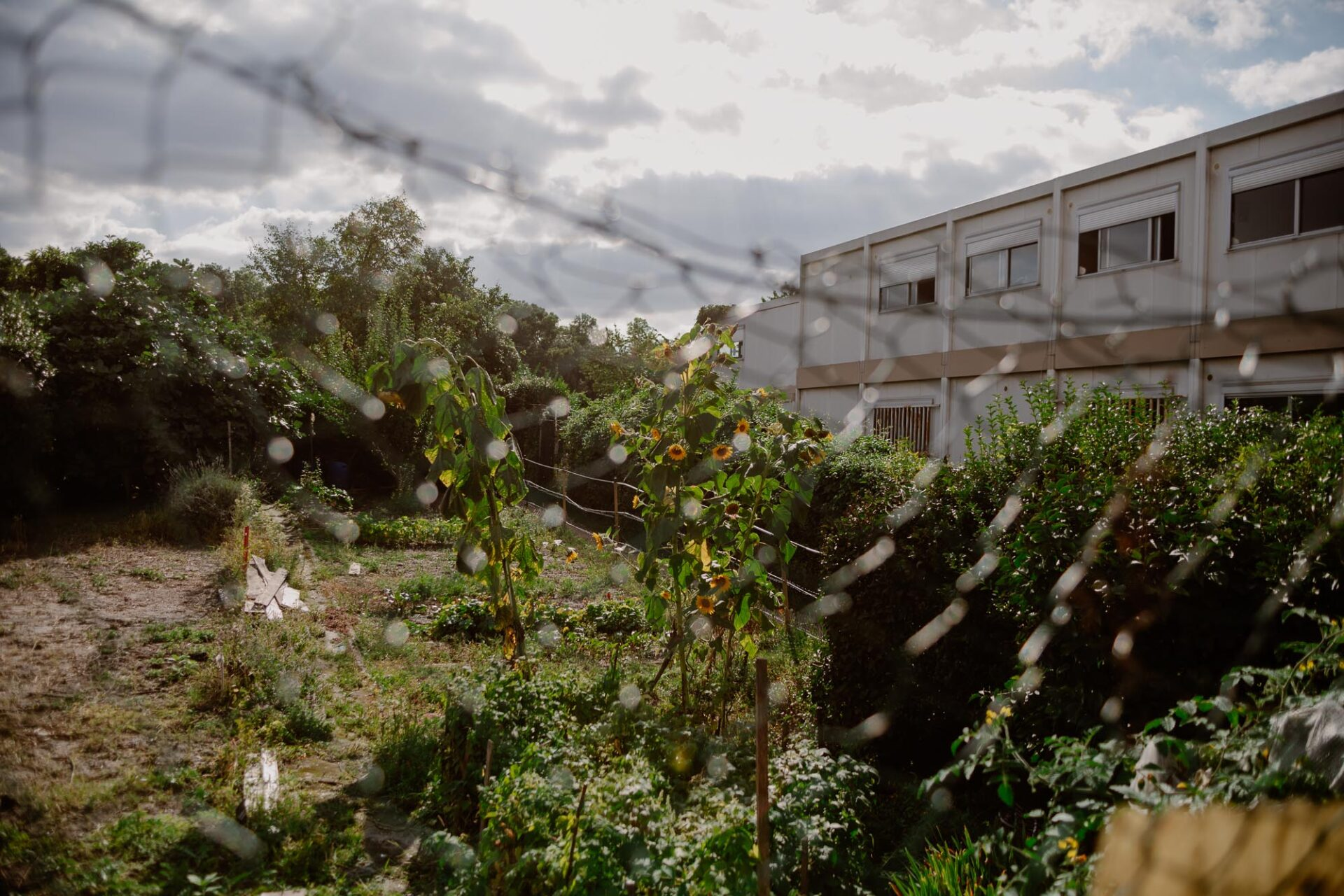 Jardins ouvriers aubervilliers 1 - Dagmara Bojenko - Eco-conscious Weddings, Births & Families