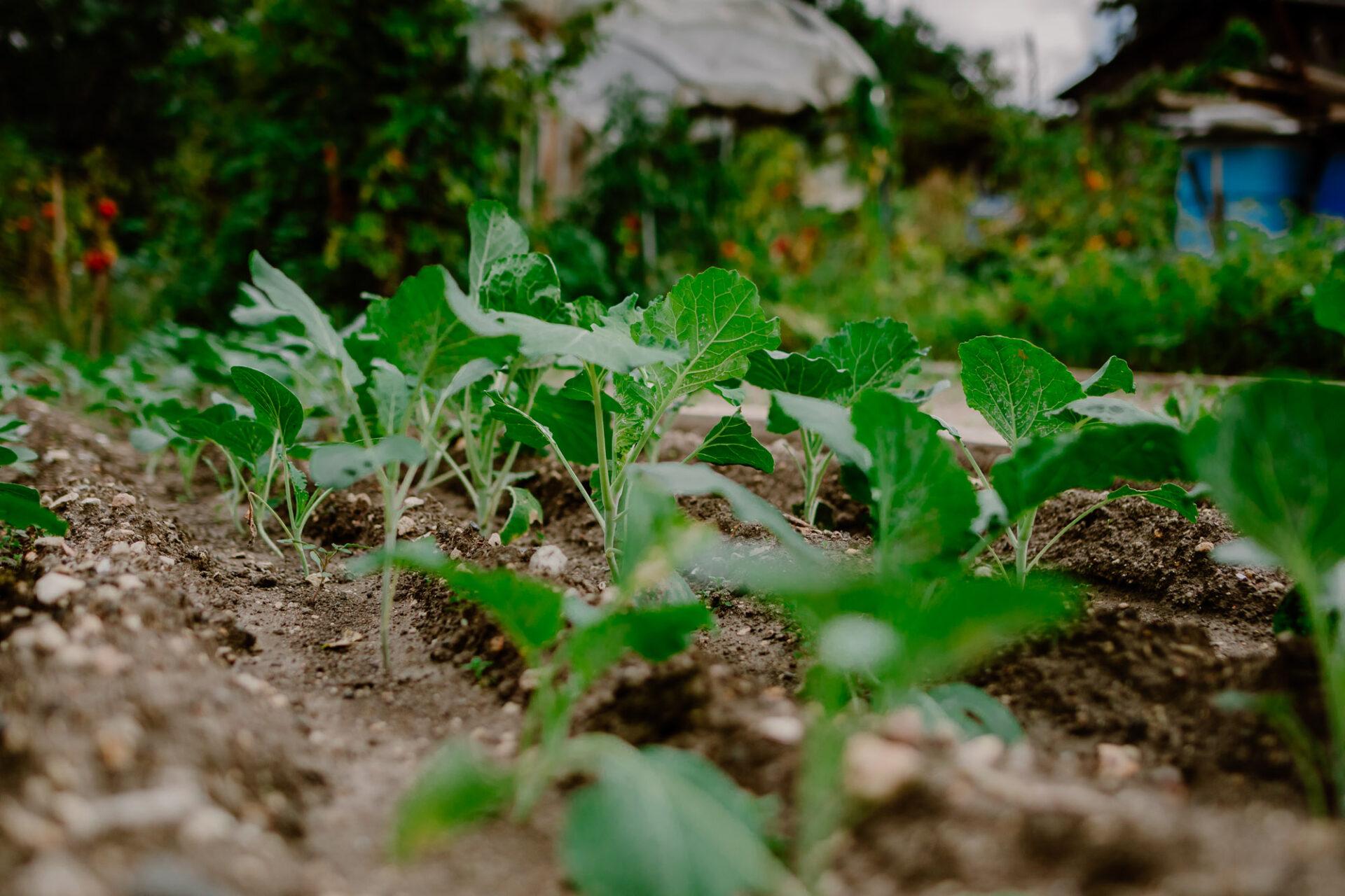 Jardins ouvriers aubervilliers 34 - Dagmara Bojenko - Eco-conscious Weddings, Births & Families