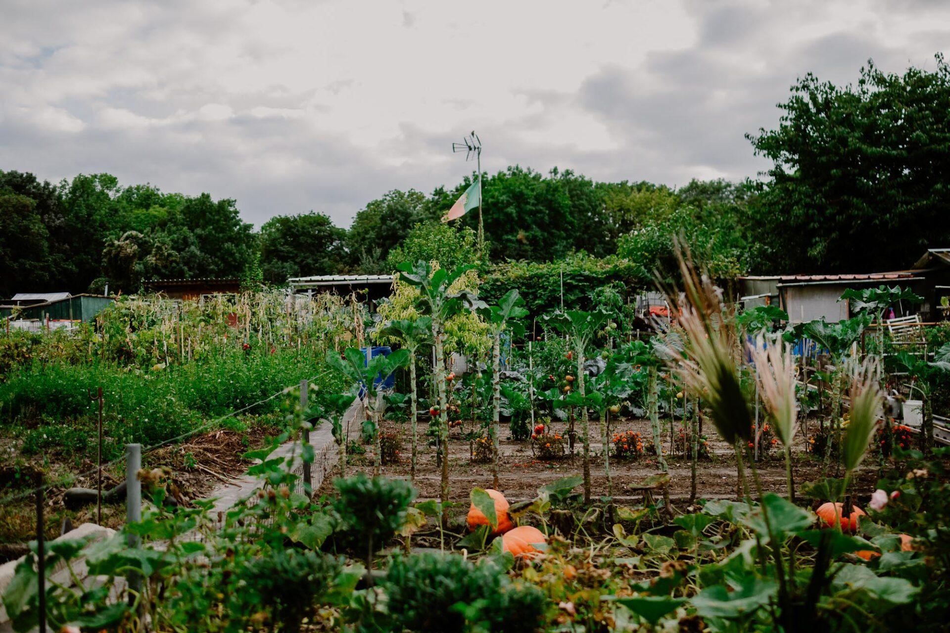 Jardins ouvriers aubervilliers 42 - Dagmara Bojenko - Eco-conscious Weddings, Births & Families