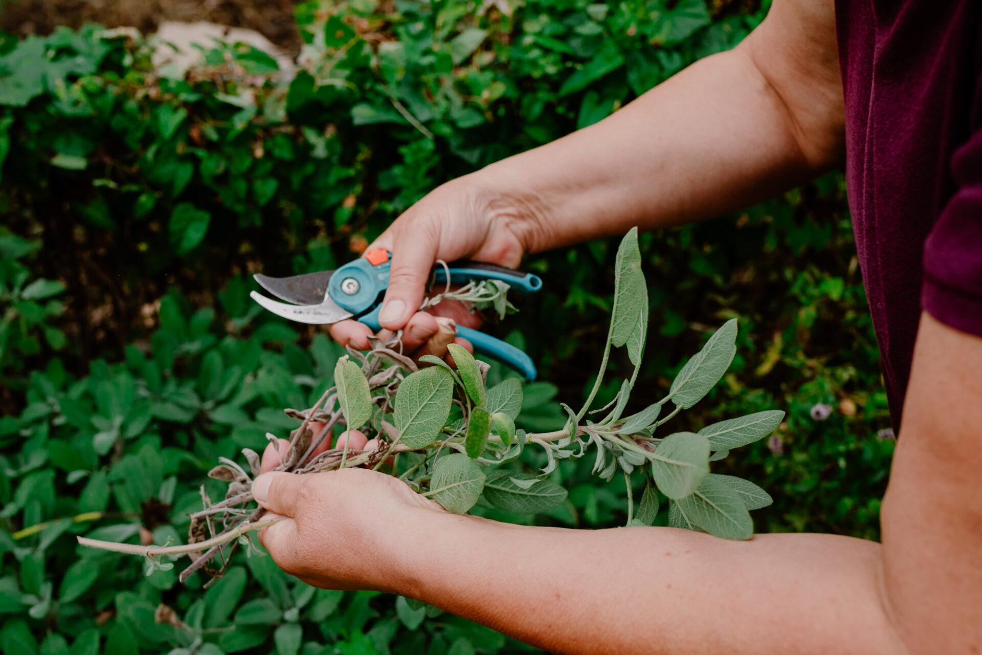 Jardins ouvriers aubervilliers 47 - Dagmara Bojenko - Eco-conscious Weddings, Births & Families